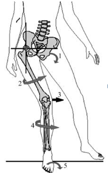 Pronating the feet can lead to problems in the hips, spine, and knees