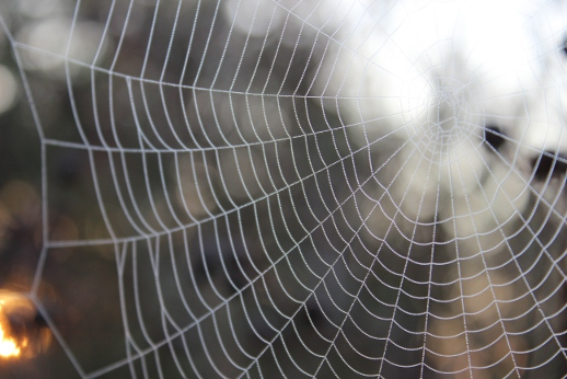 """spider web"" by Alan Reeves is licensed CC BY 2.0"