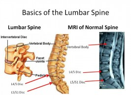 The Stem of Aplomb – Part Three: The Lumbar Spine, Sacrum, and Coccyx