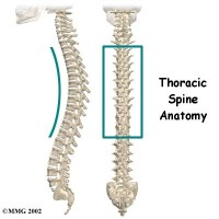 The Stem of Aplomb – Part Two: The Thoracic Spine