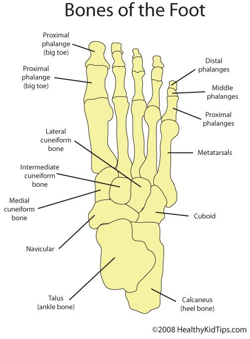 bones_foot